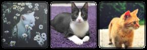 |DECOR| Cats by Volatile--Designs