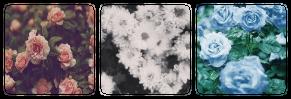 flowers - decor
