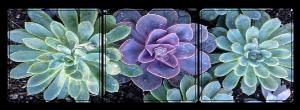 succulents - decor
