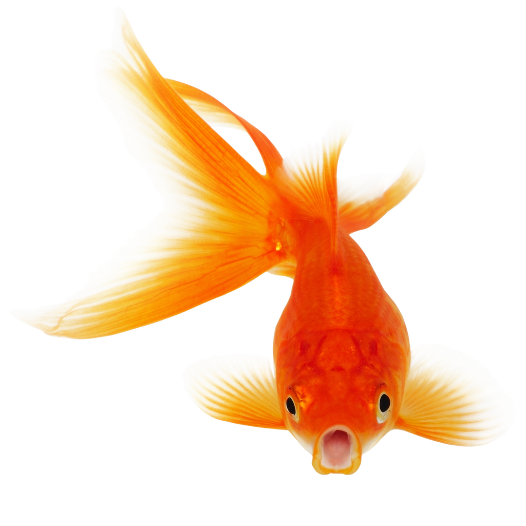 download poisson clear fish - photo #47