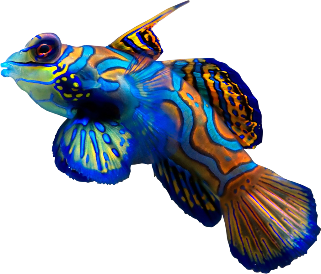 Coral Reef Fish by hrtddy on DeviantArt