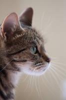 Portrait of a cat 2
