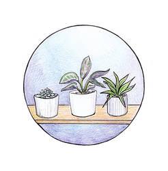 Januart 20 : Blumen / Pflanzen