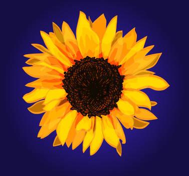Sunflower - a residue of sunlight