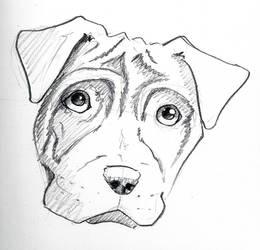 10 Min Dog 67