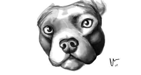Speed paint Pibble