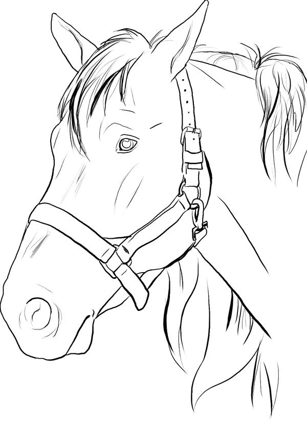 Line Drawings of Horses Heads Horse Head Lines by