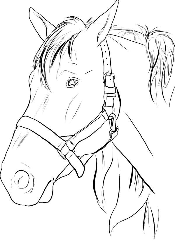 Line Drawing Horse Head : Horse head lines by darkphoenixdragon on deviantart