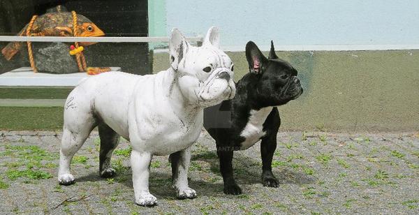 French Bulldog by FellKunst