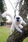 Poseable art doll, monkey Trevor