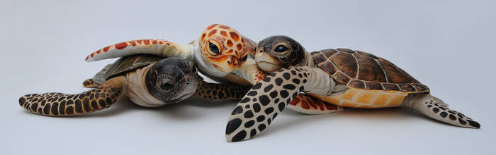 Poseable art doll, baby sea turtle
