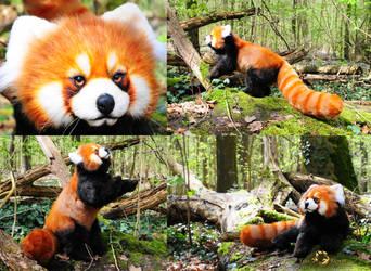 Poseable Art Doll, Red Panda