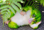 green Niffler