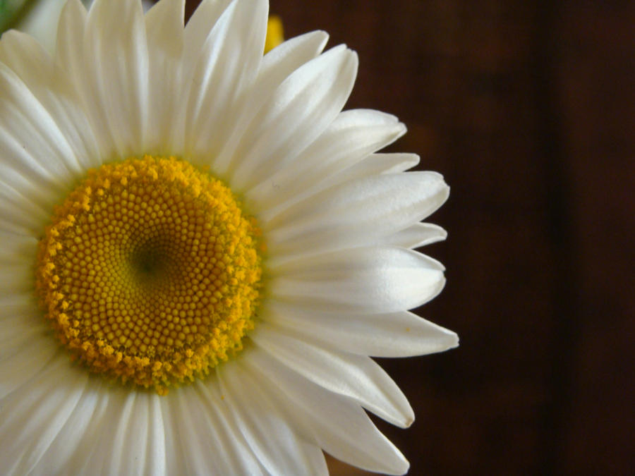 Flower Stock 10.