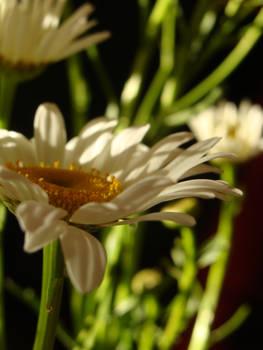 Flower Stock 41.