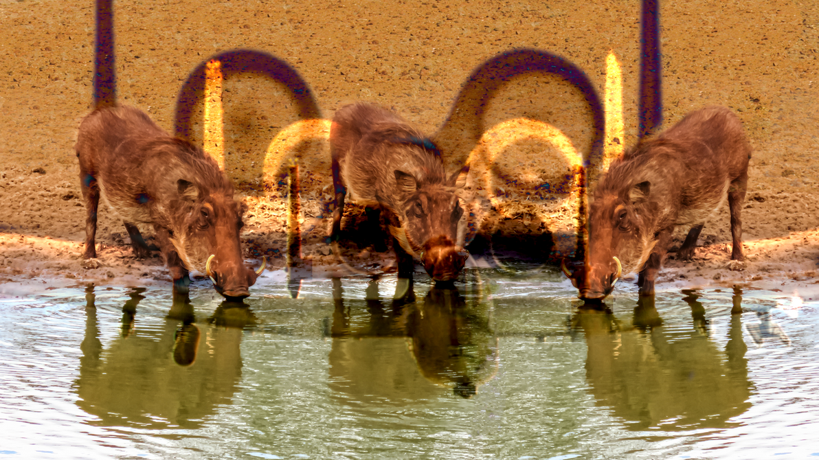 Three Little Warthogs