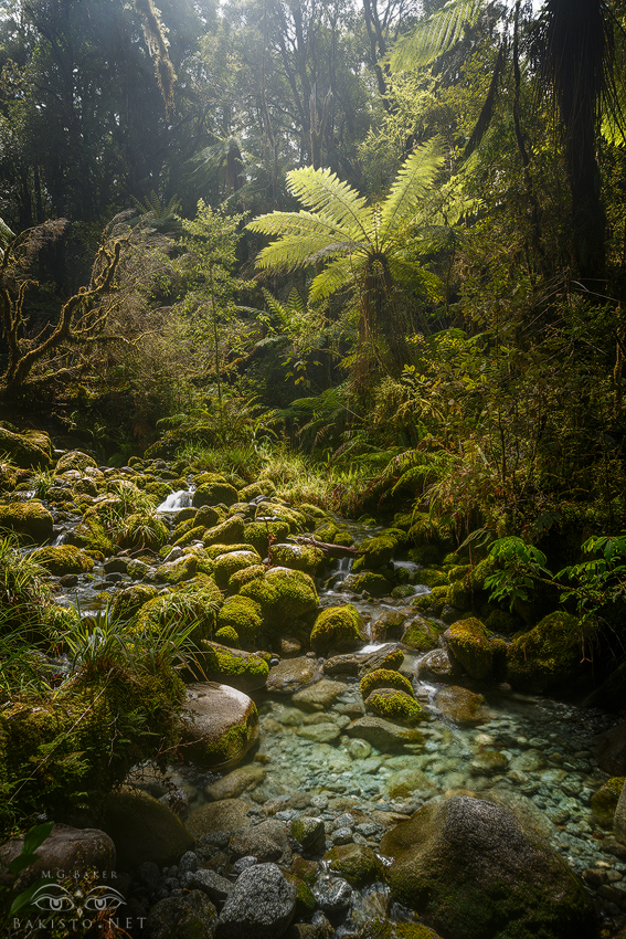 Misty Rainforest - Fjordland NP, New Zealand by Bakisto