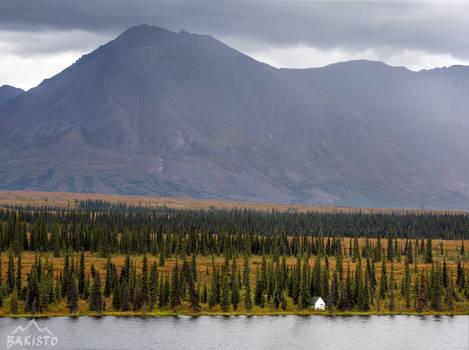 Arctic Solitude, Denali National Park