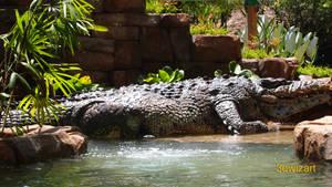 The Legendary Crocodile