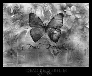 Dead Butterflies by mithrelas