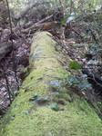 fallen moss