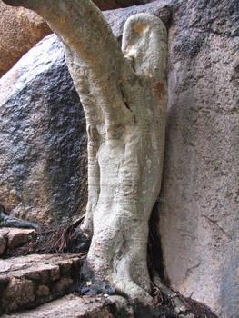 stair master tree