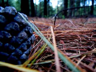 pine cone 2