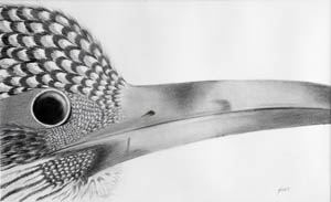 Pencil Drawing of Bird by HARO21