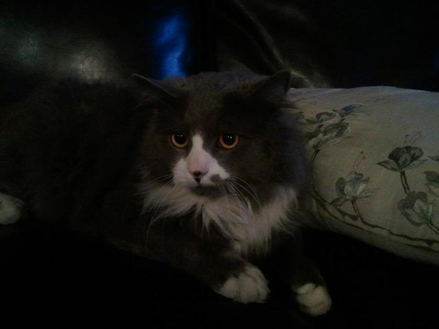 Cat by HWPD