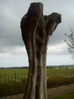 Old Tree Reaching by lennarrrt