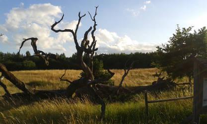 Old Dead Oak