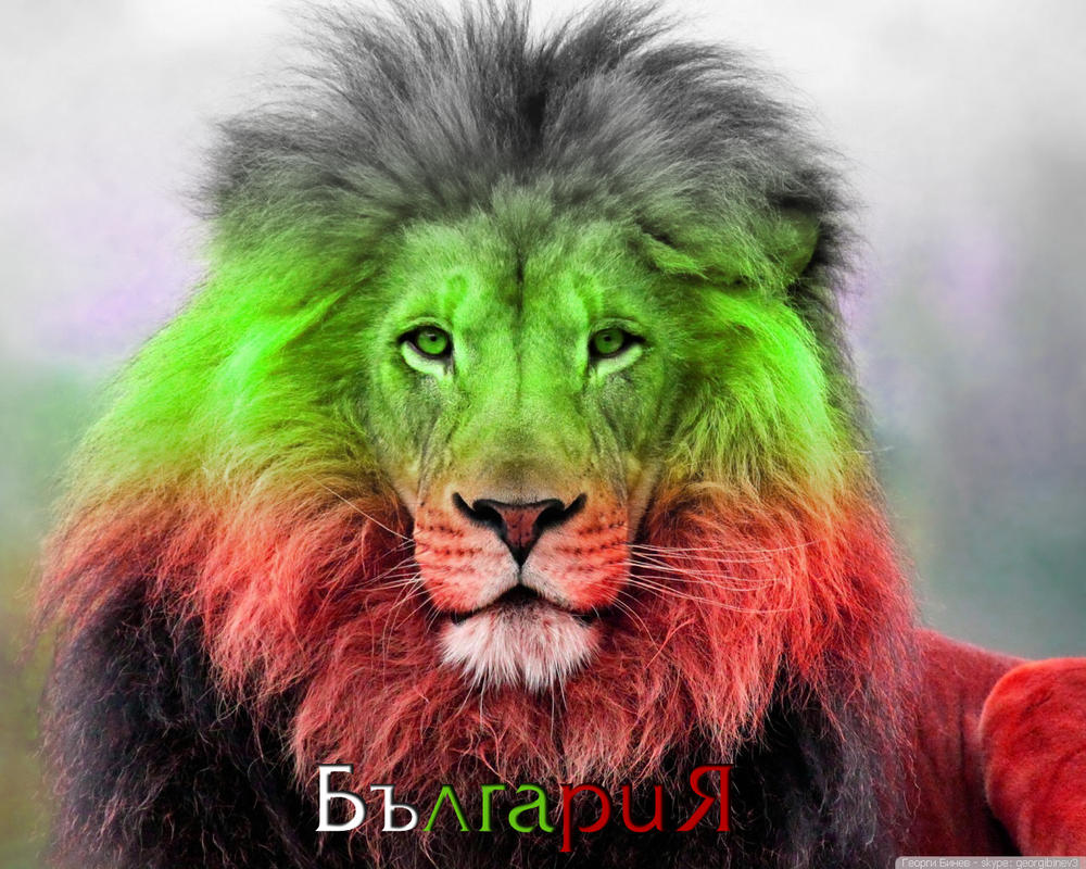 http://pre15.deviantart.net/2e24/th/pre/f/2013/310/5/6/bulgarian_lion_5_wallpaper_1280x1024_by_gbinev-d6t8waw.jpg