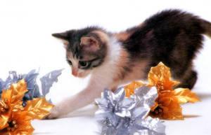 Christmas Cat 5 by MeSOSexayyy