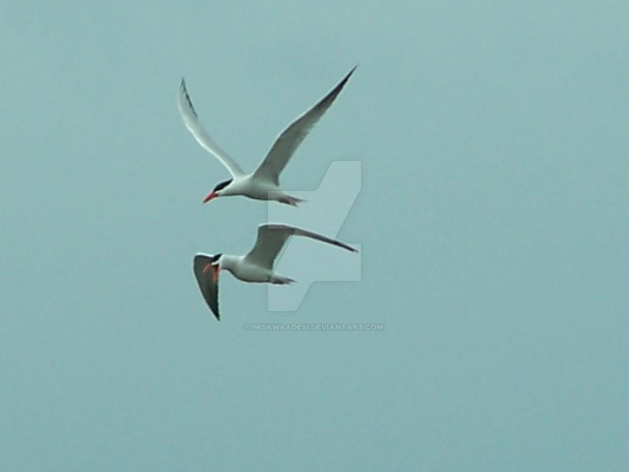 Tandem Flying by Miskwaadesi