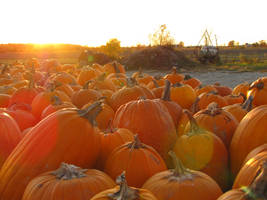 'It's the Great Pumpkins.' by Miskwaadesi