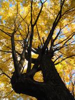 Tree 0324 by Miskwaadesi