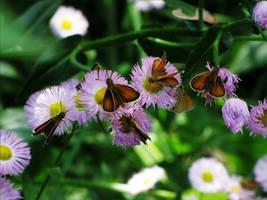 Flutterbys + Blooms by Miskwaadesi