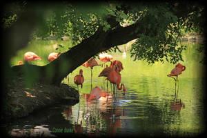 Flamingos by Miskwaadesi