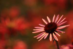 Flower 2627 by Miskwaadesi