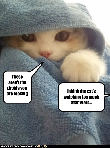 the_star_wars_cat_by_thebigguy123-d5dsoq