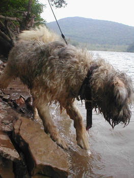 Paddington 'waterdog and quot