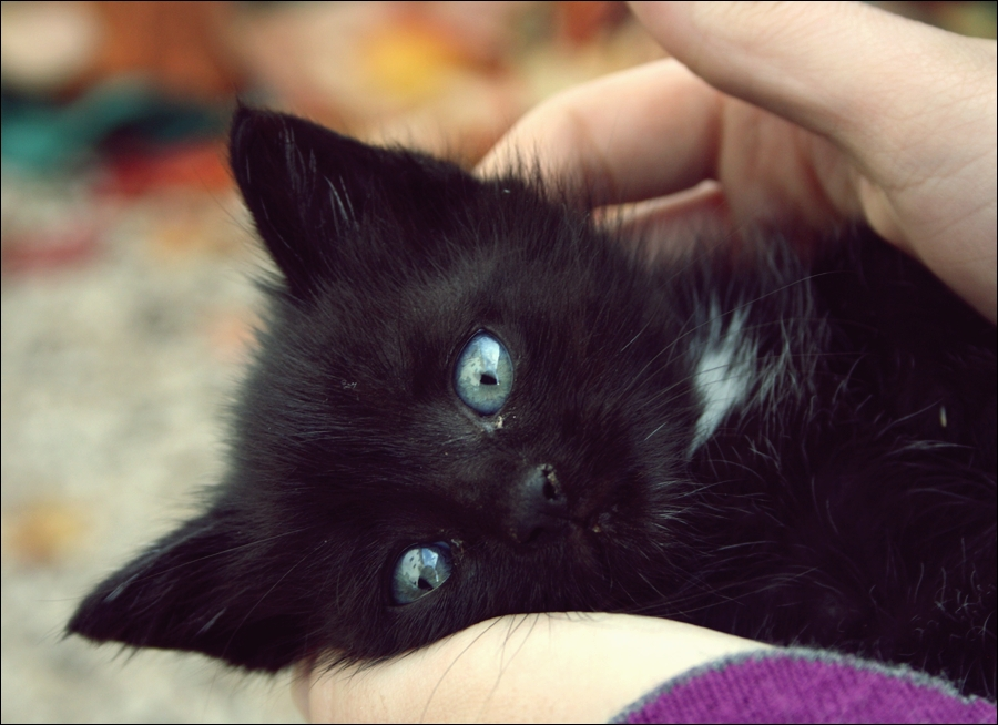 black cat with blue eyes. by ScarTissue92 on DeviantArt