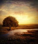 Golden Sunset by xkillz