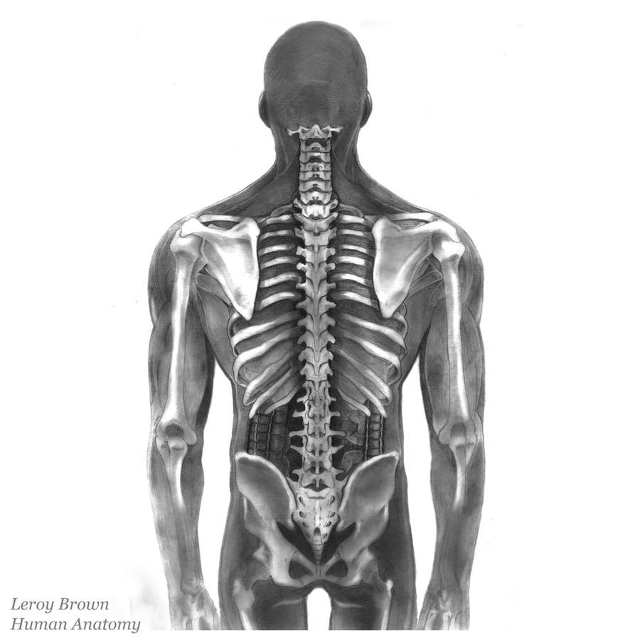 Human Anatomy Male Spine Pencils by leroybrown247 on DeviantArt