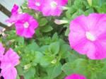 :Summertime-Flowers 2:
