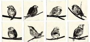 finch_sparrow