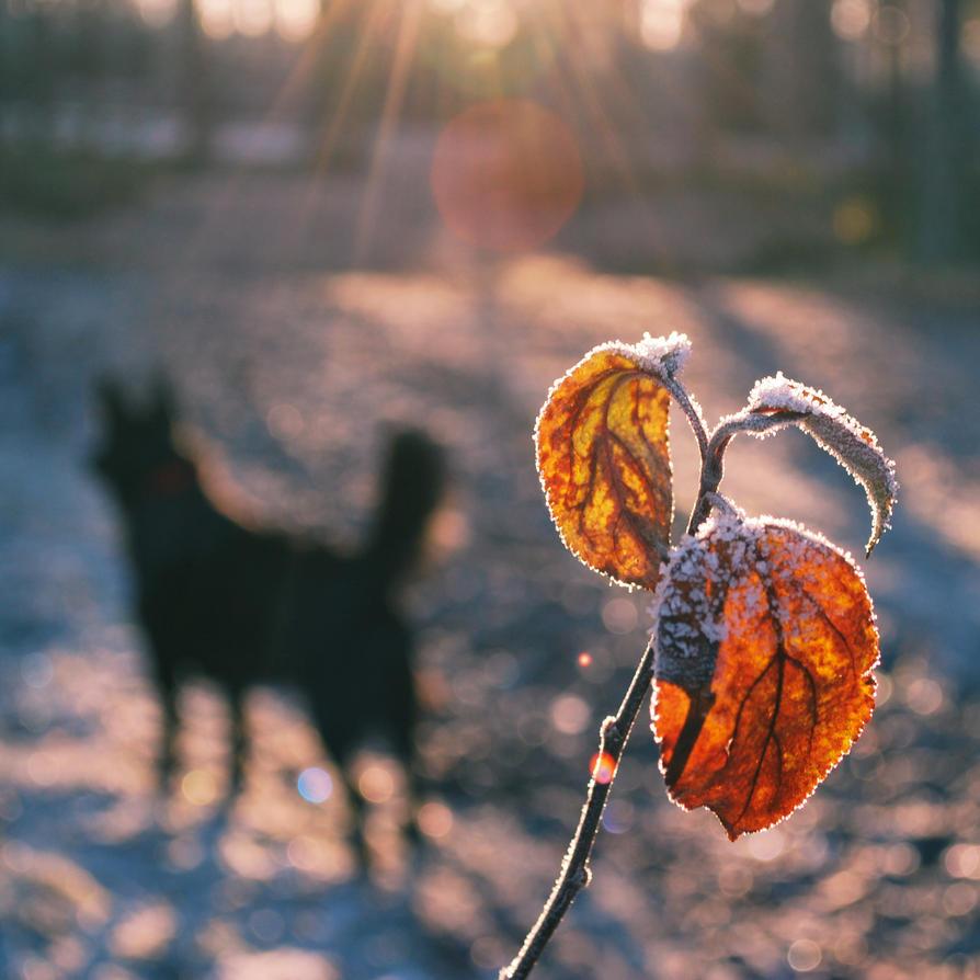 Pieni musta koira by busangane