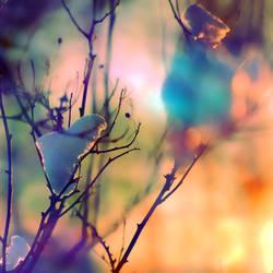 Strange Light by busangane