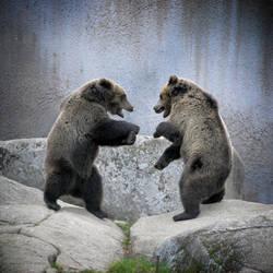 Kung-fu bears