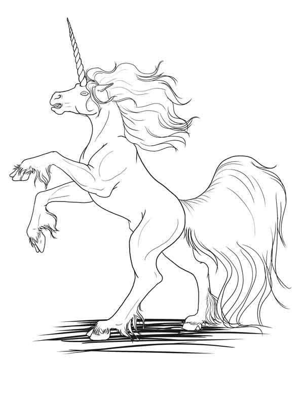 Unicorn-for-Shaharw